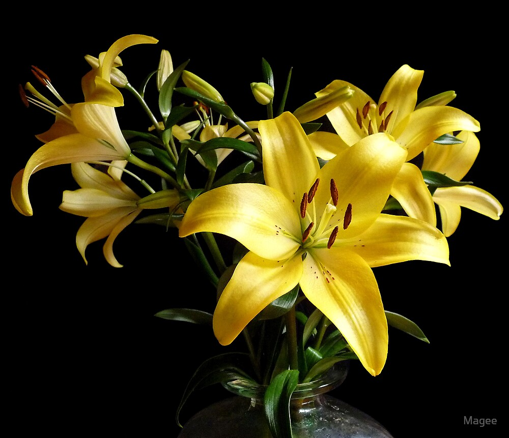 Liliums in Vase by Magee
