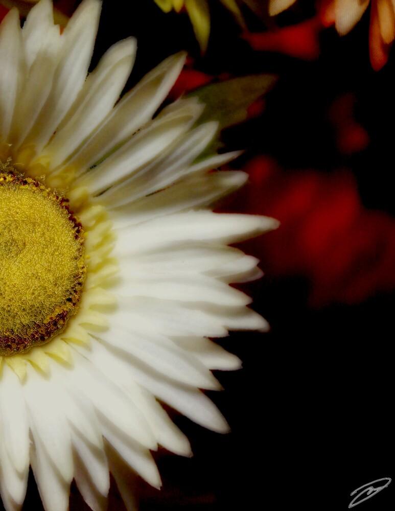 White Flower by David W Kirk
