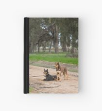 Two Young Kelpie's ....... Hardcover Journal