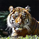 Tiger  ..fractalius  by Elaine Manley