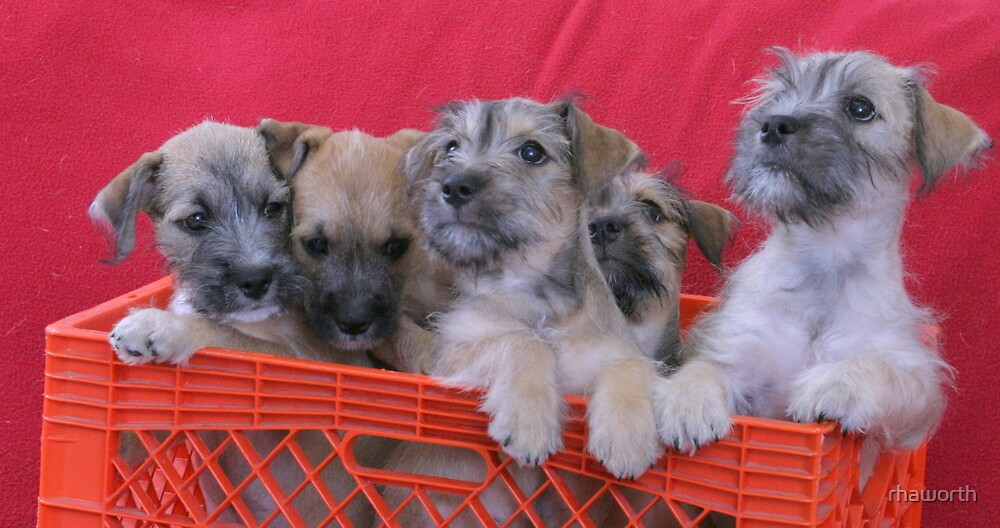Young Shelter Puppies by rhaworth