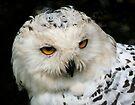 Snowy Owl by Anne-Marie Bokslag