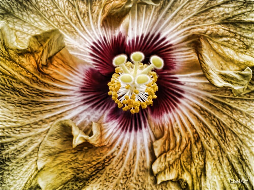 Flower Burst by EbelArt