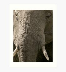 Portrait of an elephant - 2 Art Print