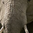 Portrait of an elephant - 2 by Yves Roumazeilles