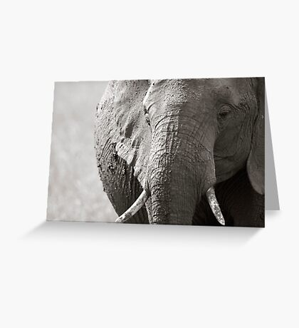 Portrait of an elephant - 3 Greeting Card