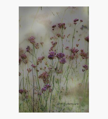 Wayward Weeds © Vicki Ferrari Photographic Print