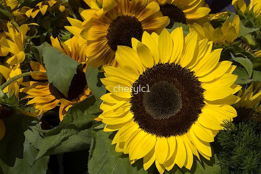 sunflowers by cherylc1
