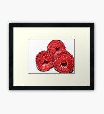 Razzzberries Framed Print