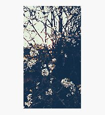 Sunset blossoms Photographic Print