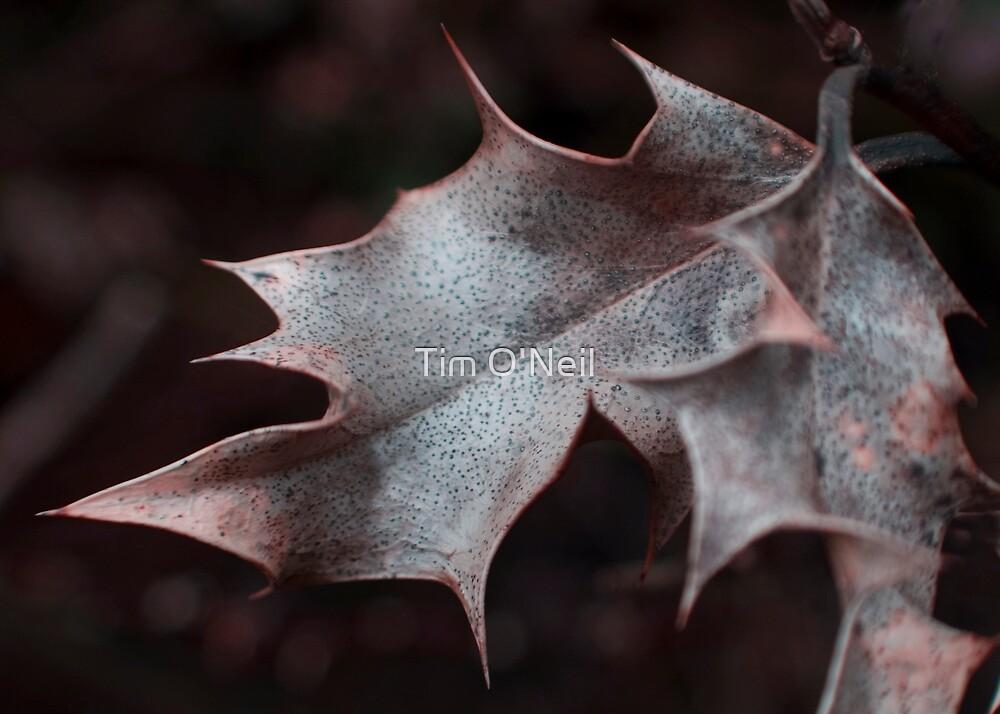 Seasonal Metamorphis. by Tim O'Neil