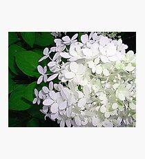 White Night Photographic Print