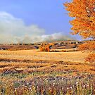 One autumn afternoon on the rolling prairie... by Normcar