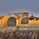 Canadian shredded wheat, all it requires is sugar (coming soon)... by Normcar