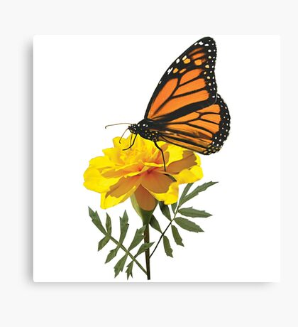 Monarch Butterfly on Marigold Canvas Print