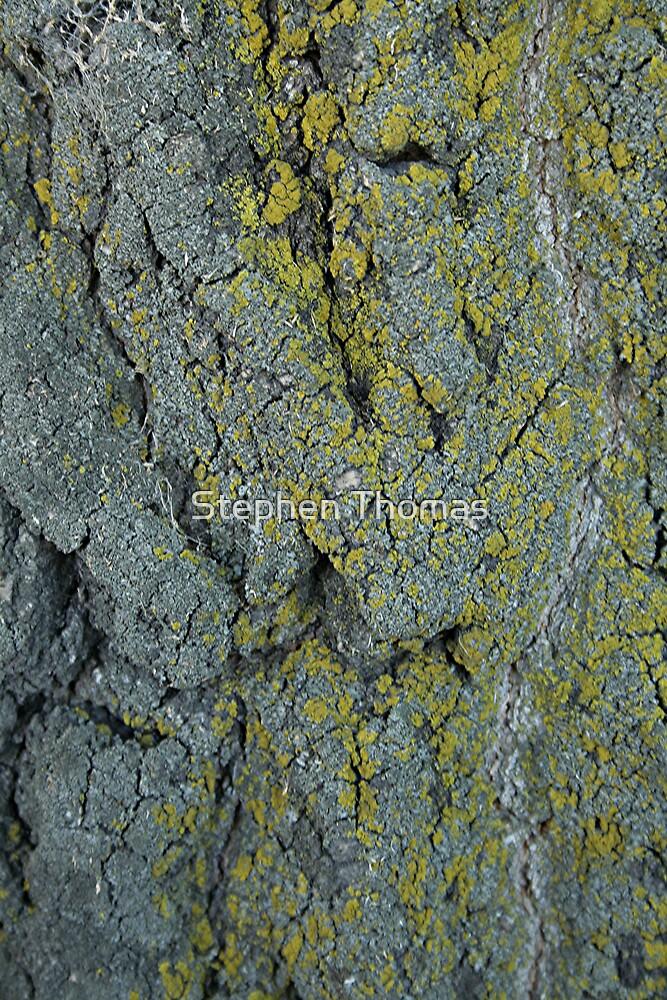 Moss On A Elm Trunk Macro by Stephen Thomas