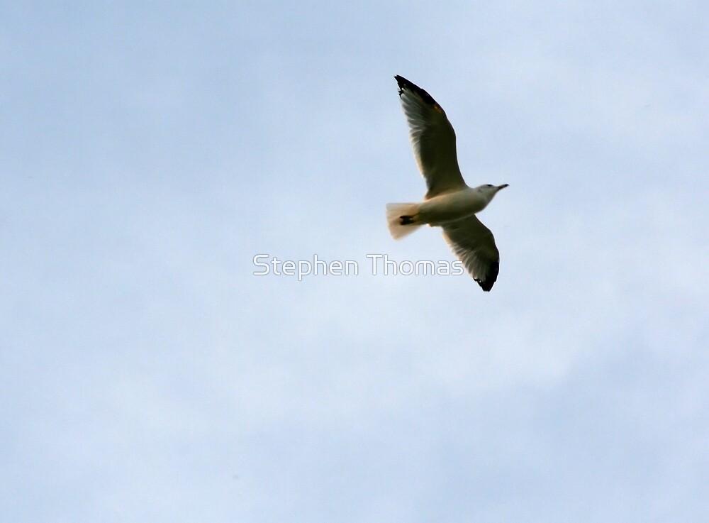 Free As A Bird by Stephen Thomas