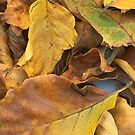 Beech Leaf Story by Fay270