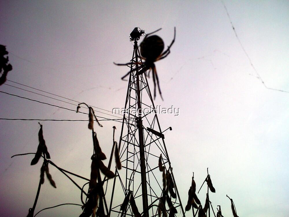 Spider by maragoldlady