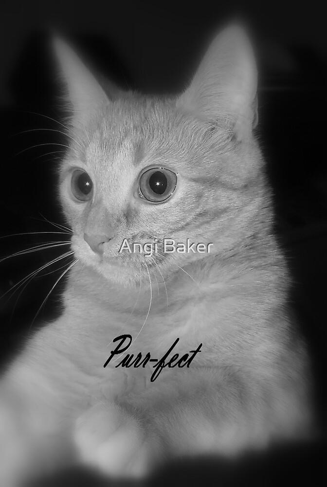 Purrr-fect by Angi Baker