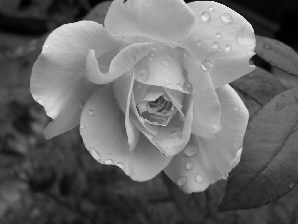 Rainy Day Rose by hellion
