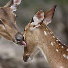 Wash Up Deer! by Olivia Plasencia