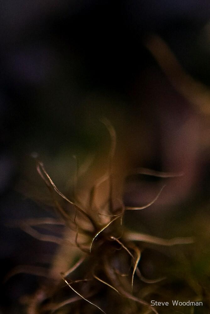 Medusa by Steve  Woodman
