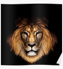 Black Lion House Lannister Game of Thrones Poster