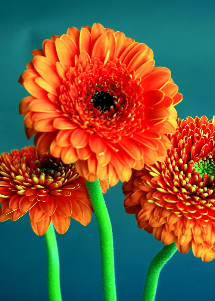 Flowers by colin gillies
