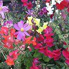 Colorful Pallette by CassPics