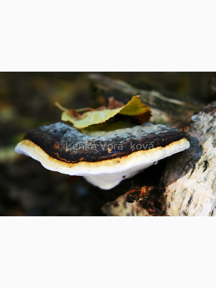 Polypore with a leafy hat by Trin4ever