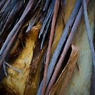The Tree Bark Collection # 35 - The Magic Tree by Philip Johnson