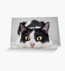 Cattitude Greeting Card