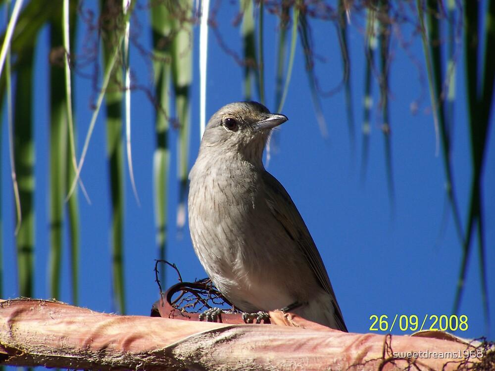 A Birds Eye View by Carol Field