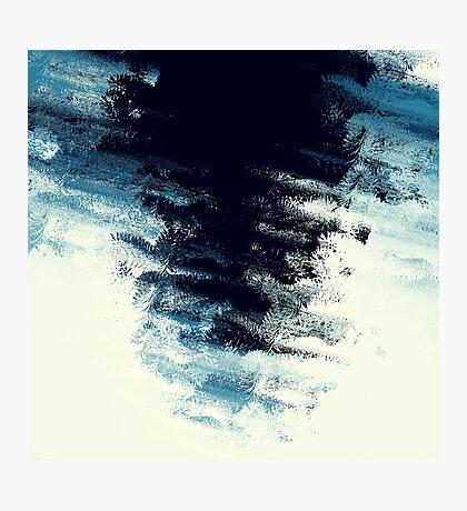 Fir in Frozen Pond Photographic Print