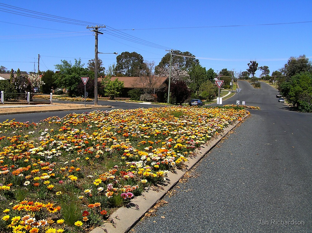 Gazania Streetscape by Jan Richardson