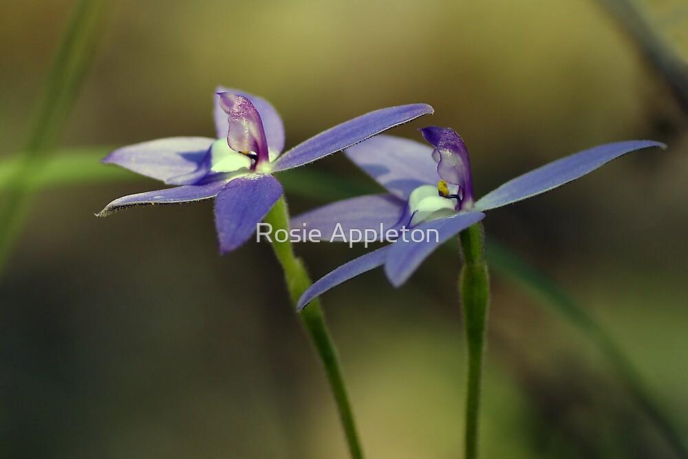 "Waxlip Orchid ""Glossodia Major"" #3 by Rosie Appleton"