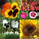 Spätsommer-Blumen-Collage von BlueMoonRose