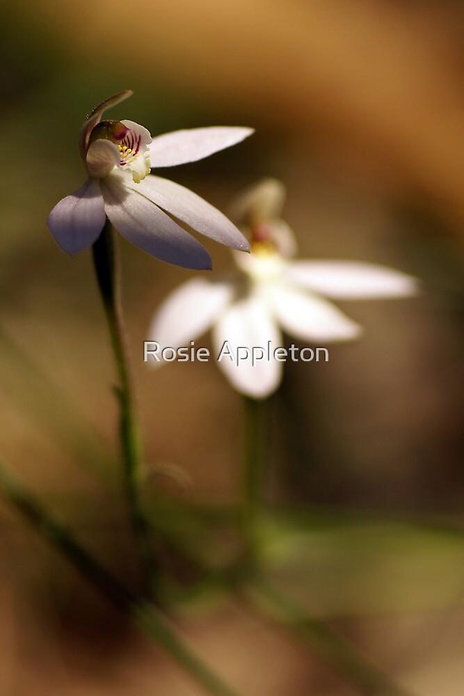 """Pink Fingers Orchid """"Petalochilus carnea"""" #2 by Rosie Appleton"""
