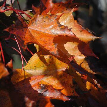 Fall Leaves by Jonice