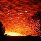 Silhouette Solice by Larry Davis