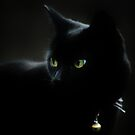 Black Night by Ladymoose