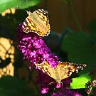 Painted Lady's  on display by MarianBendeth