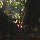 Divine Autumn Light by Brandt Campbell