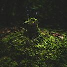 Mossy Tree Stump by Brandt Campbell