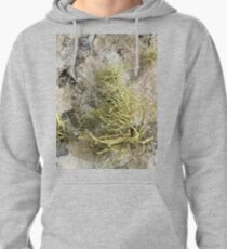 Lichen on tomb in Shalwy Valley, Kilcar, Donegal Pullover Hoodie