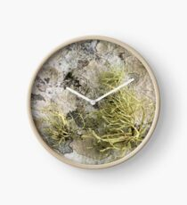 Lichen on tomb in Shalwy Valley, Kilcar, Donegal Clock
