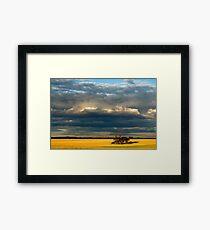 Golden fields Framed Print