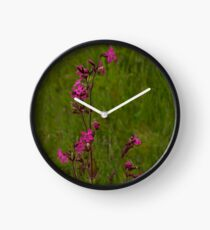 Red Campion in Burntollet Woods Clock
