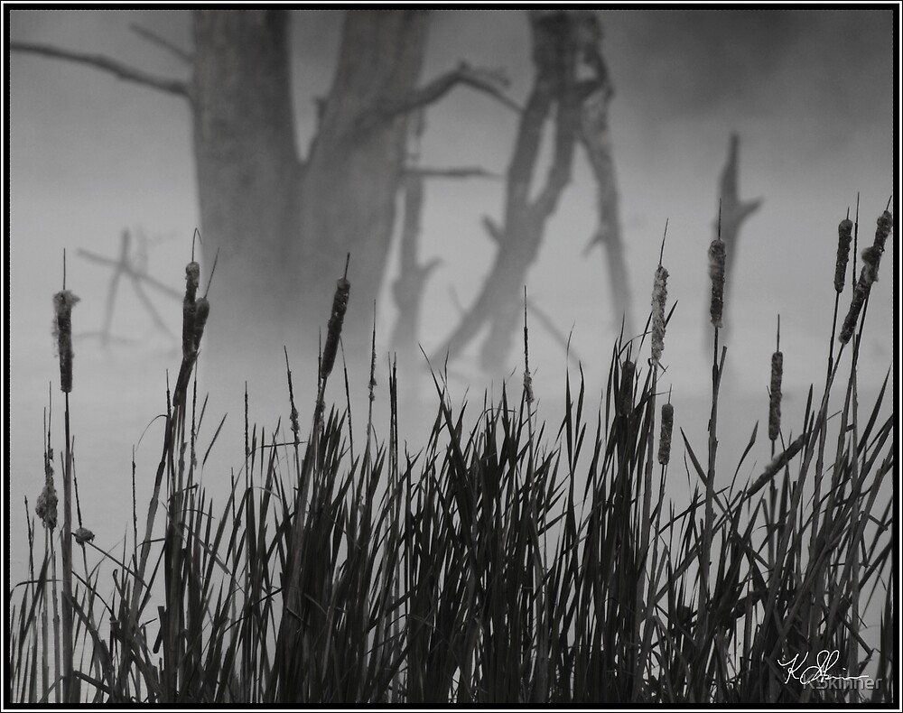 Cattails in the Fog by KSkinner